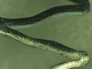 Untreated nitinol stent