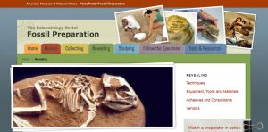 Paleontology Portal